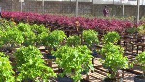 200.000 bonsais formen l'exposició permanent de Mistral Bonsai
