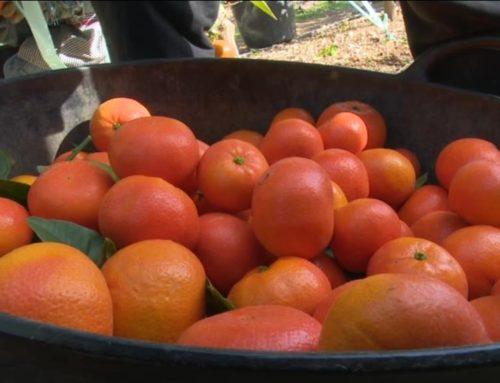 Agricultura allarga la compra de productes frescos a petits productors davant l'imminent tancament de la restauració