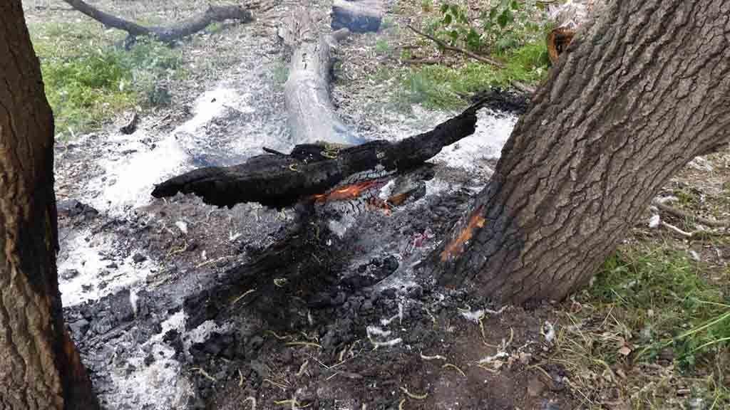 Restes de l'incendi que va cremar aquest imarts a l'illa dels bous / Animalista TE