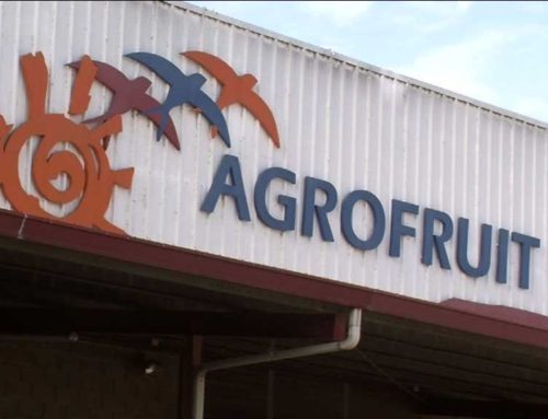 Condemnat l'exdirector d'Agrofruit a 2 anys i 3 mesos de presó per falsedat documental