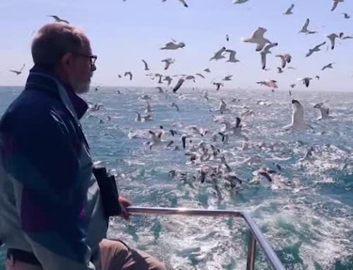Sortida ornitològica amb vaixell a Sant Carles de la Ràpita