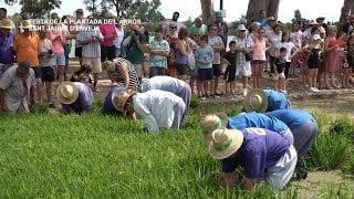 Festa de la Plantada de l'Arròs a Sant Jaume d'Enveja