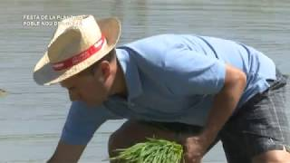 Festa de la Plantada del Poble Nou del Delta