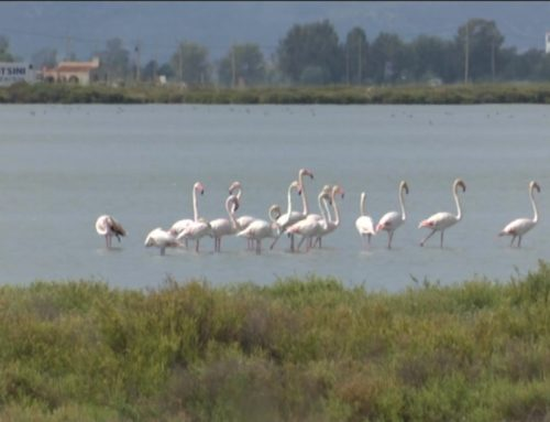 Arriba aquest cap de setmana la 5a edició del Delta Birding Festival
