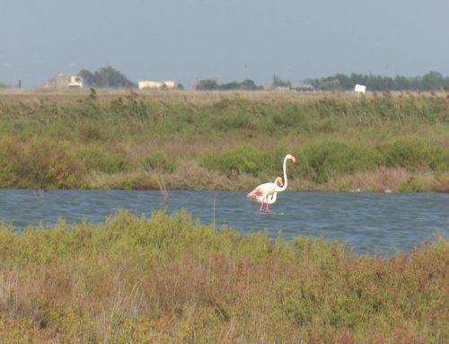 El Delta Birding Festival celebra la cinquena edició com a festival referent d'ornitologia