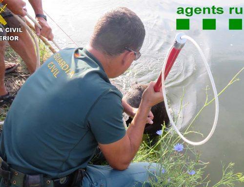 Salven un porc senglar de morir ofegat al canal de Deltebre