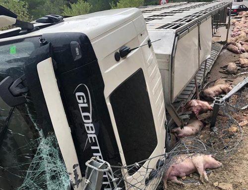 Bolca un camió de porcs a l'N-230b a Prat de Comte