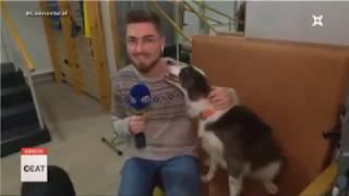 Els gossos com a teràpia per estimular la mobilitat a l'Onada