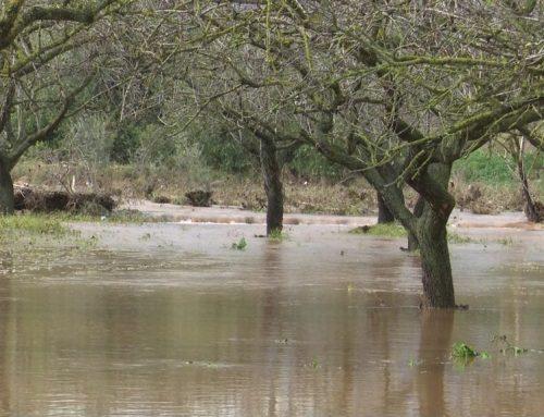 El temporal de llevant ha deixat més de 100 mm a diversos sectors del litoral i prelitoral