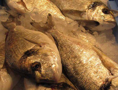 La meitat del peix que consumim prové de piscifactories segons la FAO