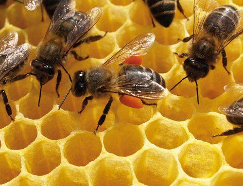 Els apicultors ebrencs reben les subvencions del Departament d'Agricultura