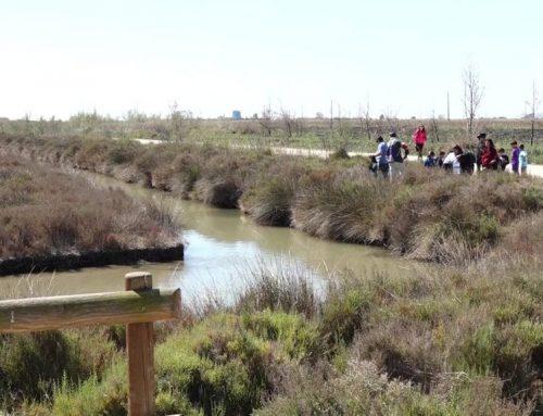 La III Festa de l'Ecoturisme del Delta de l'Ebre tindrà lloc a l'Aldea de l'1 al 3 d'octubre