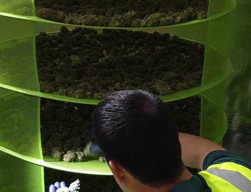 Requisada una plantació de marihuana 'indoor' a Alcanar