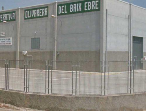 La Cooperativa Olivarera, abocada al tancament si no reverteix la mala situació econòmica