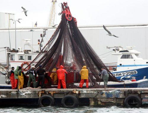 Un estudi alerta de la disminució de la mida del peix blau a Catalunya