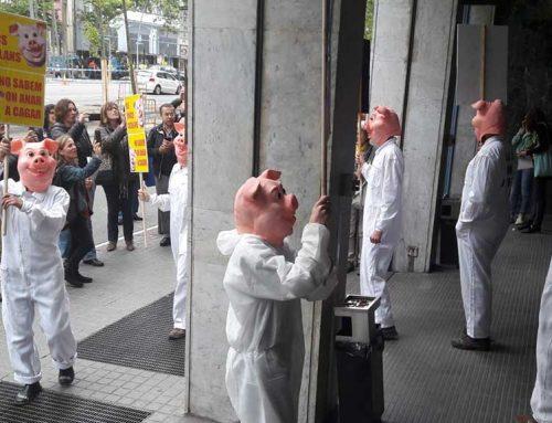 Entitats ecologistes reclamen una moratòria de granges de porcs a Catalunya