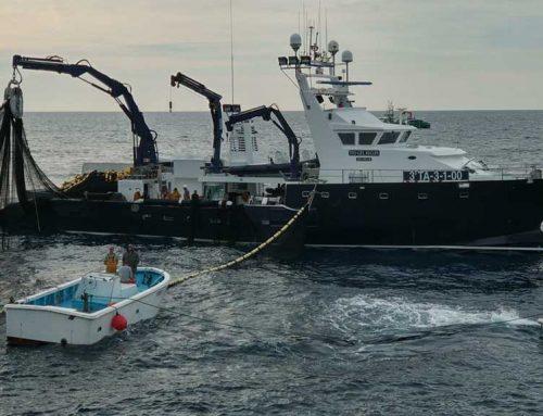 Balfegó afronta la primera campanya de pesca de tonyina roja a l'empara d'un pla de gestió, després de la recuperació de l'espècie