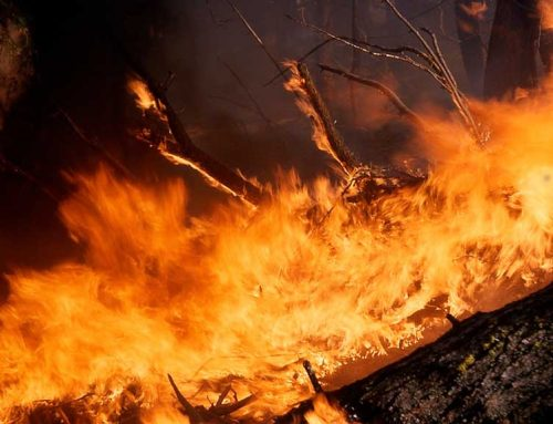 El Govern analitza les línies estratègiques d'actuació dels Bombers de la Generalitat davant la nova generació de grans incendis forestals