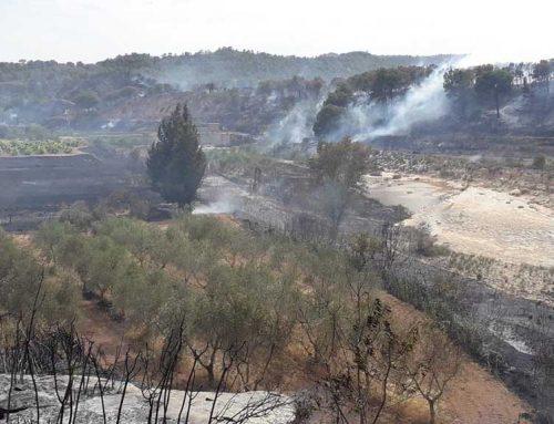[ACTUALITZACIÓ] Estabilitzat el foc de Batea, que ha cremat 14 hectàrees