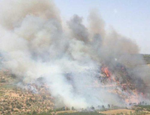 ÚLTIMA HORA: Declarat un foc entre Vinebre i la Torre de l'Espanyol