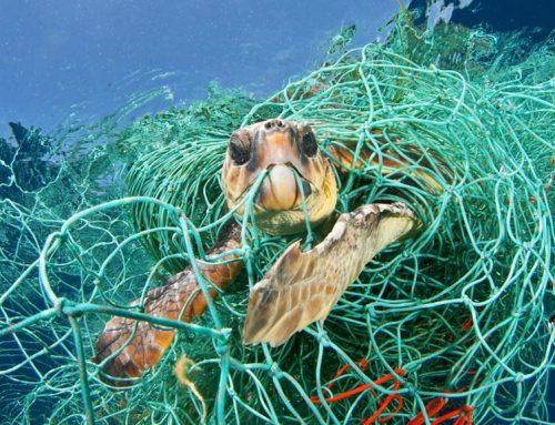 Les escombraries poden arribar a ser el 40% de la captura pesquera en àrees pròximes a ciutats