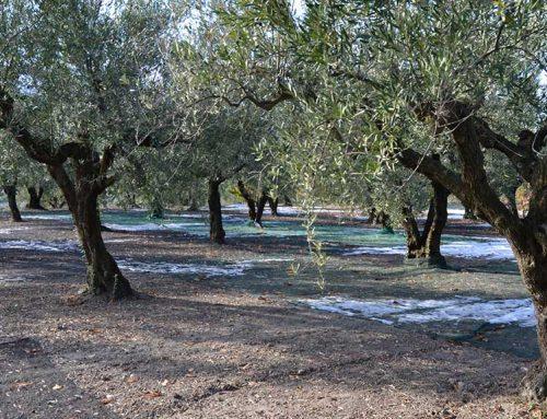 JARC i la FCAC se sumen a la manifestació de Madrid en defensa del sector de l'oli d'oliva