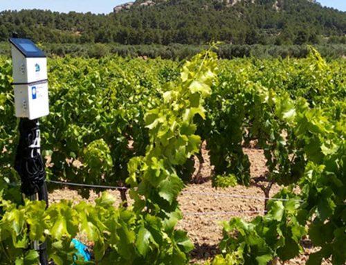 La vinya a Catalunya s'encamina cap a la certificació 100% ecològica