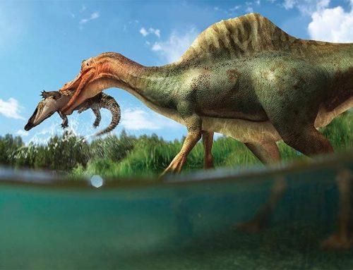 Trobada espectacular d'un esquelet de dinosaure als Ports