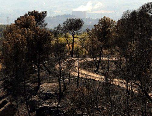 El Departament d'Agricultura rep 85 sol·licituds d'ajuts d'afectats per l'incendi de la Ribera d'Ebre