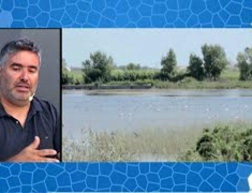 """La Brossa al Parc Natural del Delta de l""""Ebre"""