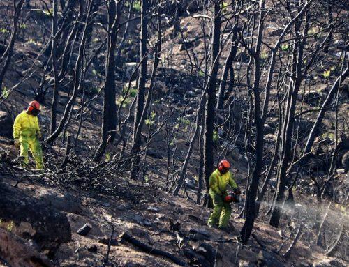 El PSC demana a la Generalitat que activi el fons d'ajudes als pagesos afectats pels incendis de la Ribera d'Ebre