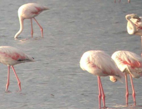 Una vintena d'especialistes visiten espais del Parc Natural del Delta amb motiu del Delta Birding Festival