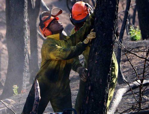 El Govern aprova la inversió de 2,2 MEUR per les actuacions de regeneració del bosc cremat a la Ribera d'Ebre