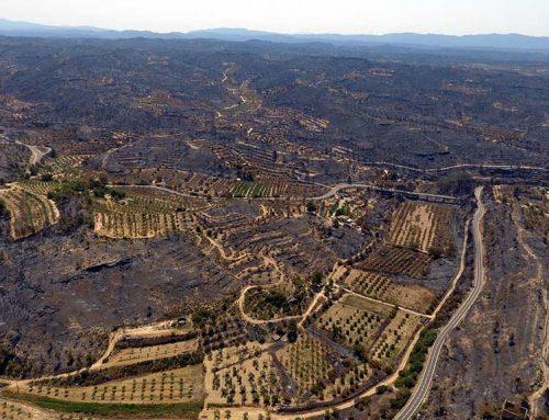 Agroseguro pagarà el 300% del capital assegurat pels danys causats pel foc de la Ribera