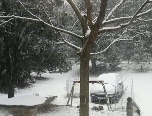Les primeres nevades arriben al territori