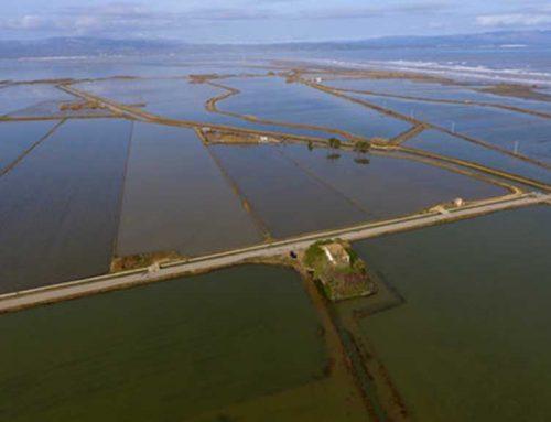 L'Estat aposta per una gestió integrada del Riu, el Delta i la costa, als ETIs finals aprovats per la CHE