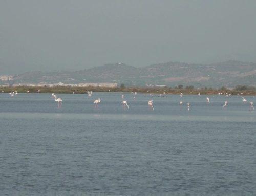 El turisme s'atura als parcs naturals del delta de l'Ebre i els Ports, i la naturalesa guanya espai