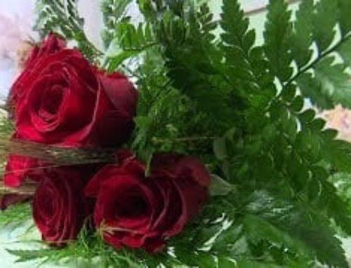 L'Esmolet:  Visitem una floristeria de l'Ebre que fa repartiment de roses a domicili