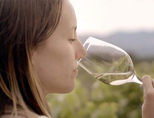 La DO Terra Alta aborda en una jornada tècnica les alternatives per al sector del vi en un escenari post covid
