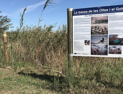 L'Ajuntament de l'Ampolla restaura i millora  les infraestructures de l'entorn natural de la  bassa de les Olles