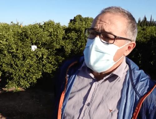 UGT alerta sobre els possibles perills de contagi entre els temporers de la campanya dels cítrics