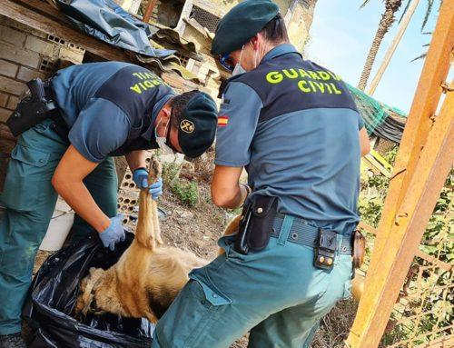 La Guàrdia Civil investiga un veí de l'Aldea per un presumpte delicte de maltracte animal