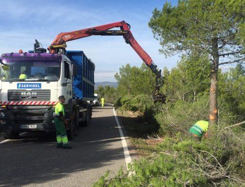 La Diputació realitza tasques de poda i tala en 31,29 km de xarxa viària de l'Ebre per prevenir incendis i millorar la visibilitat dels conductors