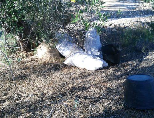 La Guàrdia Municipal de l'Aldea frustra el robatori de 150 quilos de garrofes d'una finca del camí del Ranxero