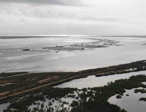 La Generalitat declara els aiguamolls de l'Illa de Mar i l'Embut reserves naturals de fauna salvatge