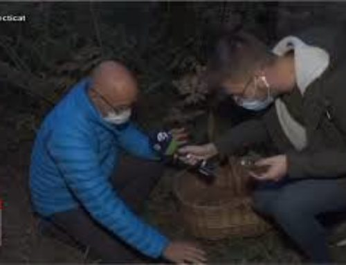 Què cal tenir en compte per anar a buscar bolets al bosc?