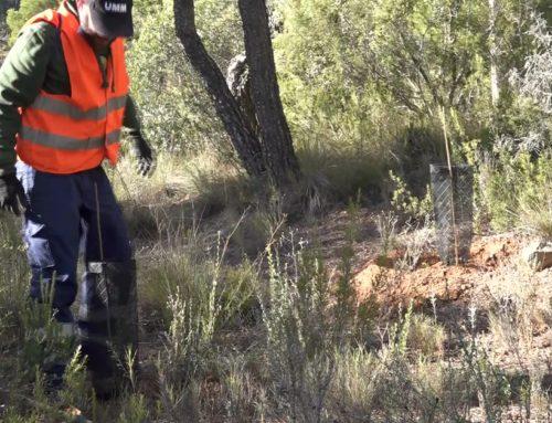 Acaben els treballs de reforestació de la finca de l'ermita del Remei de Flix, afectada per l'incendi de juny 2019 a la Ribera d'Ebre