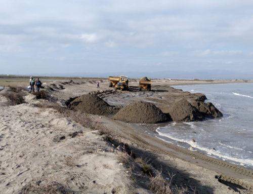 Costes mou sorra des del Fangar per reforçar un tram de la platja de la Marquesa, al delta de l'Ebre