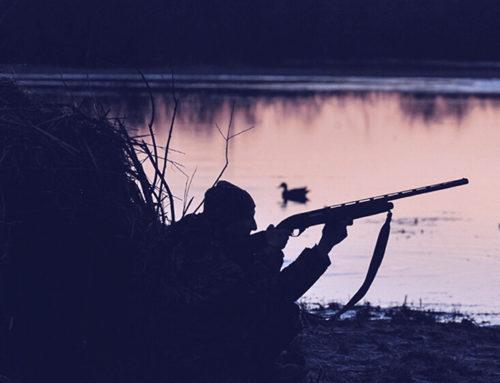GEPEC-EdC denuncia que es permeti caçar ànecs al delta de l'Ebre de nit durant el toc de queda