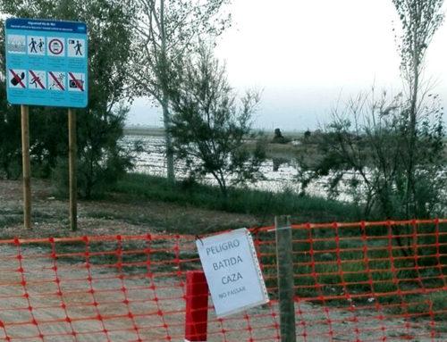 Agricultura defensa que la caça d'ànec al delta de l'Ebre no incompleix ni el toc de queda ni el confinament municipal